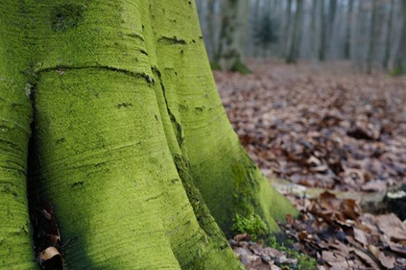 green_trunk_600px