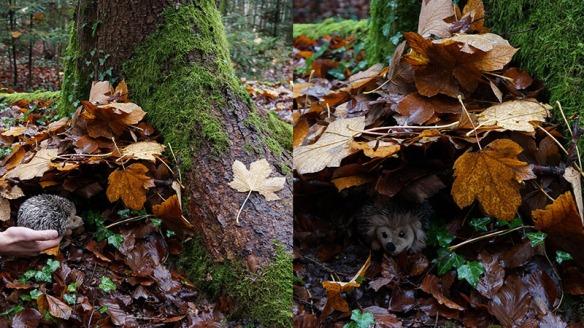 jardin_2014_automne_DSC09182duo_800x450px